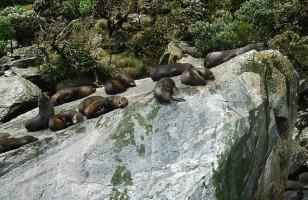 10.1388431148.fur-seals