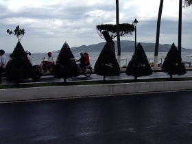 Just some of the tens of km of Topiary.