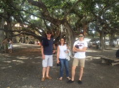 15.1451572728.the-banyan-tree-maui-largest-in-the-usa