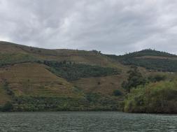 Pretty vineyard views along the river.